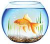 Цены на аквариумы в Харькове
