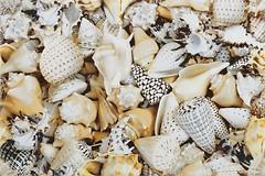 Фото Opoczno декор Nizza Shells A 30x45