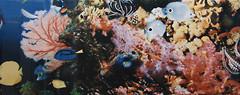 Фото Атем декор Yalta 1 Sea 20x50 (15898)