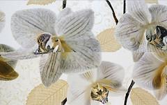Фото TAU Ceramica декор-панно Alma Flor 40x60 (комплект 2 шт)