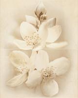 Фото Cersanit декор-панно Diana Flower 40x50 (комплект 2 шт)
