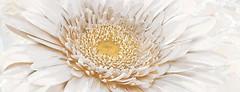 Фото Inter Cerama декор Illusione 071 23x60