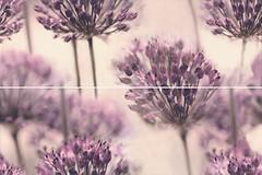 Фото Ceramika Color декор-панно Flint Dekor Dandelion 50x75 (комплект 2 шт)