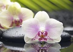 Belani декор Азалия Орхидея 1 фисташковый 25x35