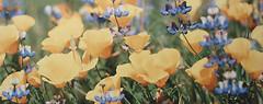 Фото Атем декор Yalta Flower YL 20x50 (15940)
