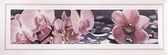 Фото Атем декор Florian 1 Orchid 10x30 (16376)