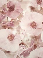 Фото Cersanit декор-панно Elisabeta Flower 45x60 (комплект 2 шт)
