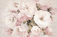 Cersanit декор САКУРА (SAKURA) Цветок 30x45