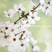 Фото Opoczno декор-панно Early Spring Flower 59.4x60 (комплект 2 шт)