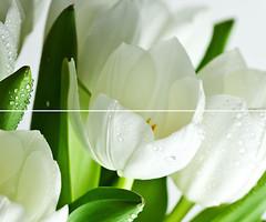 Фото Marconi декор-панно Arco Digital Tulipany 50x60 (комплект 2 шт)