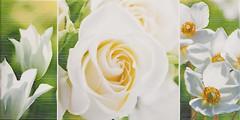 Фото Атем декор Charlotte GN 2 25x50