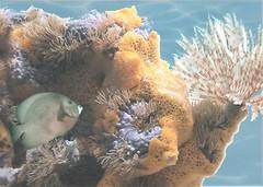 Фото БерезаКерамика декор Лазурь Морской мир 6 бирюзовый 25x35
