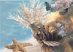 Фото БерезаКерамика декор Лазурь Морской мир 9 бирюзовый 25x35