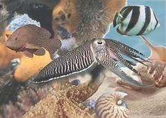 Фото БерезаКерамика декор Лазурь Морской мир 10 бирюзовый 25x35