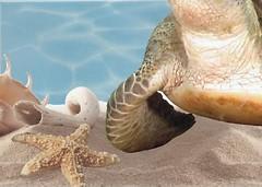 Фото БерезаКерамика декор Лазурь Морской мир 11 бирюзовый 25x35