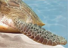Фото БерезаКерамика декор Лазурь Морской мир 12 бирюзовый 25x35