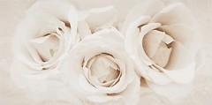 Фото Opoczno декор Camelia Inserto Flower 29.7x60