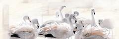 Фото Inter Cerama декор-панно Salus бежевый 60x90 (П214022) (комплект 2 шт)