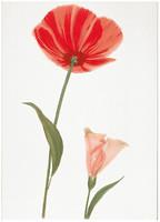 Фото БерезаКерамика декор Капри Мак 1 красный 25x35
