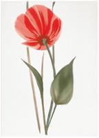Фото БерезаКерамика декор Капри Мак 2 красный 25x35