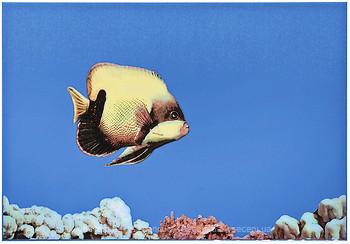 Фото Атем декор Monocolor Fish 1 27.5x40 (07734)