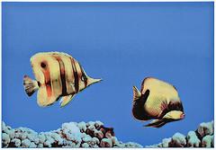 Фото Атем декор Monocolor Fish 2 27.5x40 (07735)
