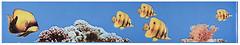 Фото Атем фриз Monocolor Fish 7x40 (07957)