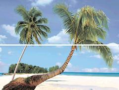 Фото Dual Gres декор-панно Silk Set Paradise A 45x60 (комплект 2 шт)