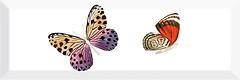 Фото Monopole Ceramica декор Farfalla 2 10x30