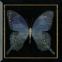 Фото Monopole Ceramica декор Farfalla Blu Negro 30x30