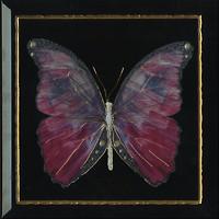 Фото Monopole Ceramica декор Farfalla Rosa Negro 30x30