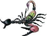 Фото 4D Master Скорпион Анатомия животных (26113)