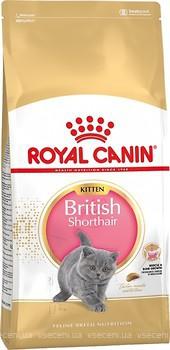 Фото Royal Canin Kitten British Shorthair 2 кг
